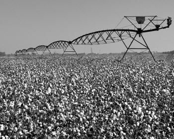 "Norwood Creech's photograph, ""Pivot over Defoliated Cotton"" will be on display in ""Perspectives from the Delta"" at the Southern Tenant Farmers Museum in Tyronza."