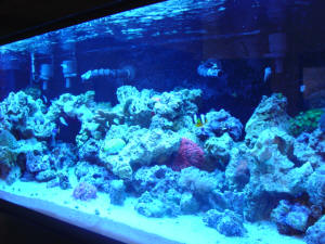 "The marine aquarium is featured in the ""Hall of Science"" in ASU's Laboratory Sciences Center, East Wing."